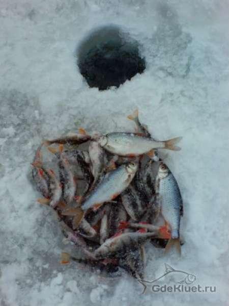 Прогноз клева для рыболовов - Исилькуль