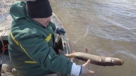 На борьбу с браконьерством вышли рыболовы
