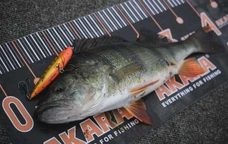 Как поймать много рыбы на воблеры