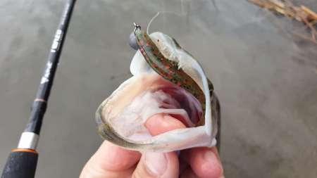 Слаг, переловивший много рыбы