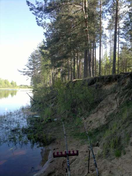 Река желча псковская область рыбалка