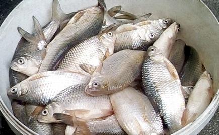 Прогноз клева рыбы. Коми, Сыня. Прогноз погоды для рыбаков.