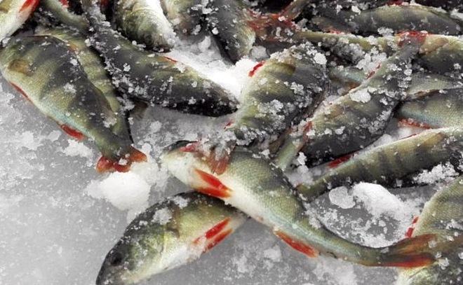 Е1 рыбалка форум отчеты челябинская область