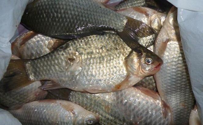 Курганская область рыбалка зимняя