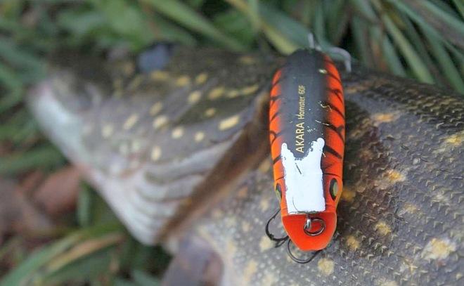 Универсальный воблер Akara Hamster 60F