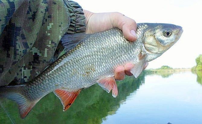 все о рыбалке на спиннинг на сейму